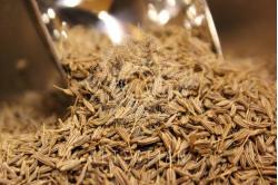 Αγριοκύμινο (σπόροι) - 100 gr